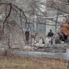 Идет вырубка деревьев в областной телерадиокомпании