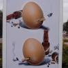 Крутые яйца