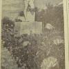 Аллея. Август 1961 года