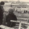 Главветврач Сулукольского совхоза обьезжает свое хозяйство, 1965 год.