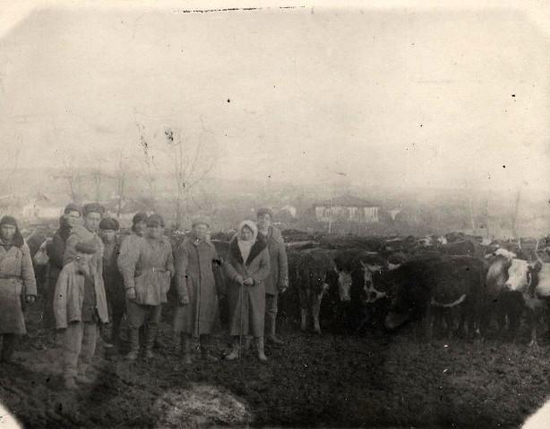 Перегон скота в освобожденные районы