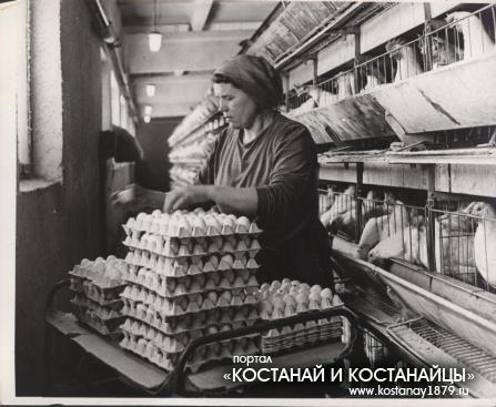 Укладка яиц в цеху Тарановской птицефабрики. 1966 год