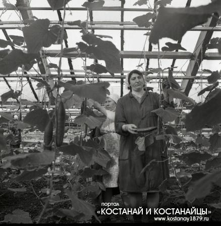 Тепличное хозяйство КЖБИ. 1991 год
