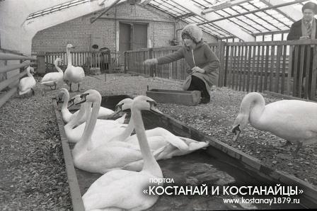 СУ Зеленстрой. Кустанай 1983 год